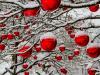 Marché de Noel 2018 de Bédarrides (84)